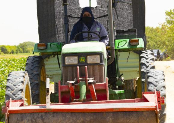 Recrutement Tractoristes